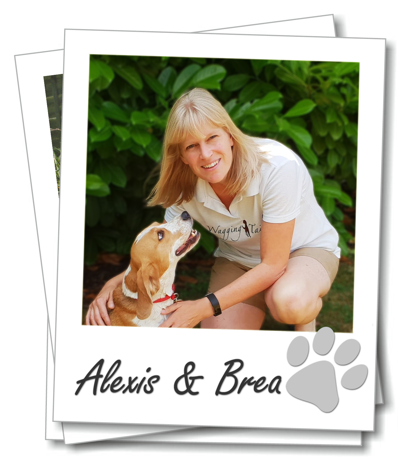 Gloucestershire home dog boarding. Wagging Tails Franchisee Alexis Bennet with her Beagle, Brea