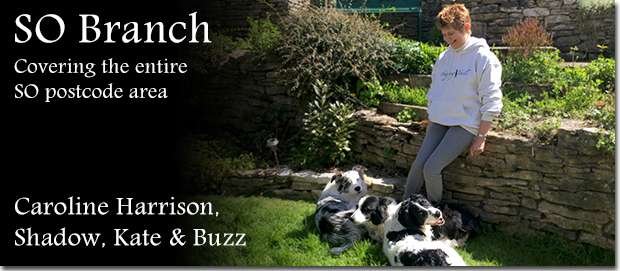 Home dog boarding in Hampshire. Caroline Harrison of Wagging Tails with her dogs Shadow, Kate and Buzz