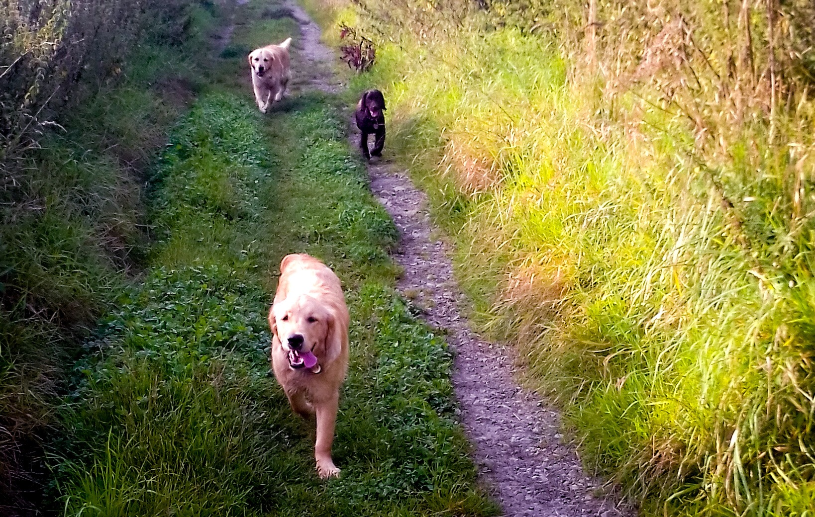 Lottie and Clara enjoying a walk with Digby on their holiday.