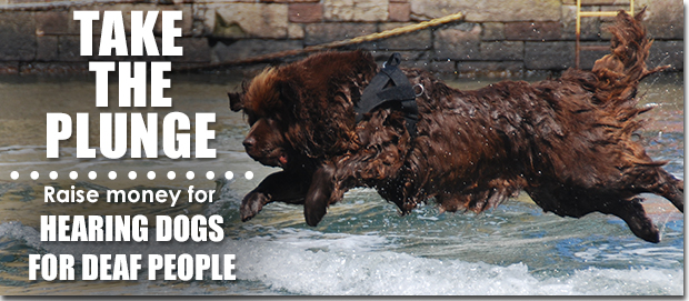 """Newfoundland jumps into water to rescue two """"casualties"""""""