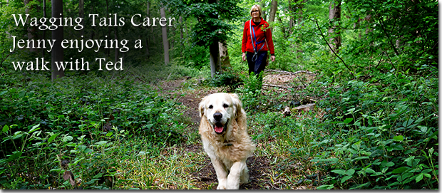 Jenny and Ted Wagging Tails Carer Banner