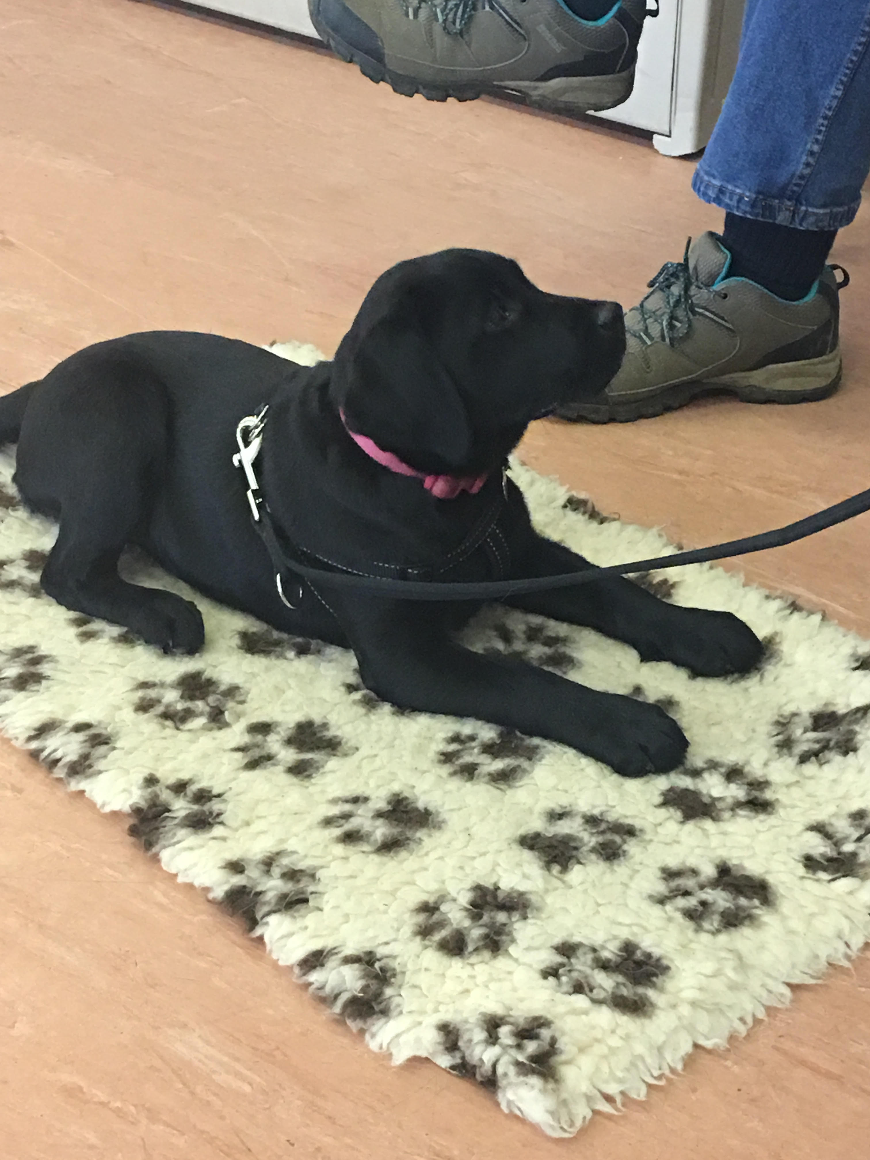 Wagging Tails dog boarding Hearing Dog puppy Neve