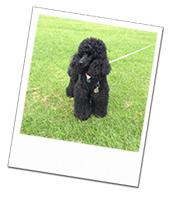 Bentley enjoying his Hampshire dog boarding holiday