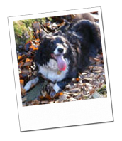 Bess relaxing in the forest whilst on her Wagging Tails dog holiday