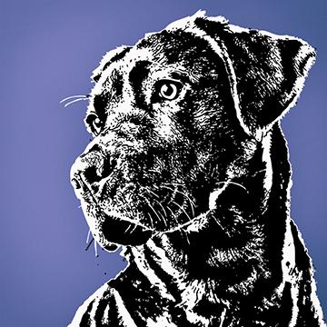 Black Labradors Big Vinyl