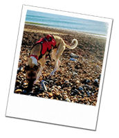 Walter enjoying the beach on his Wagging Tails dog holiday in Sussex