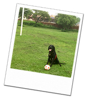 Archie out playing football on his dog holiday in Warwickshire