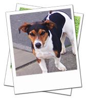 Daisy enjoying a walk on her Warwickshire dog holiday