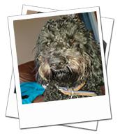 Oscar on holiday dog boarding in Warwickshire