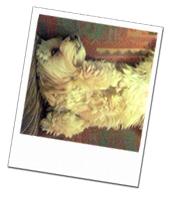 Feebee enjoying a relaxing break on her Torquay dog boarding holiday