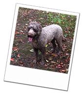 Fergus enjoying a muddy walk on his Wagging Tails dog boarding holiday