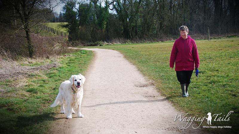 Dog Carer Barbara out walking Simpson