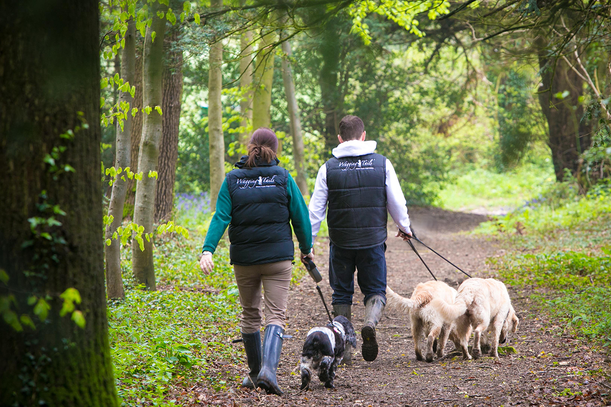 Lisa and Jim from Wagging Tails walking their dogs in the woods