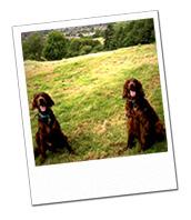 Finn & Orla enjoying their Gloucestershire Dog Boarding Holiday