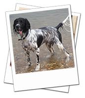 Freddie enjoying a walk at the seaside on his Portsmouth dog boarding holiday