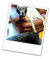 Freddie and Sansa enjoyed a great Berkshire dog boarding holiday