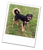 Gino enjoying a walk on his South Wales dog boarding holiday