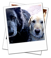 Libby and Misstmae on their Gloucestershire dog boarding holiday