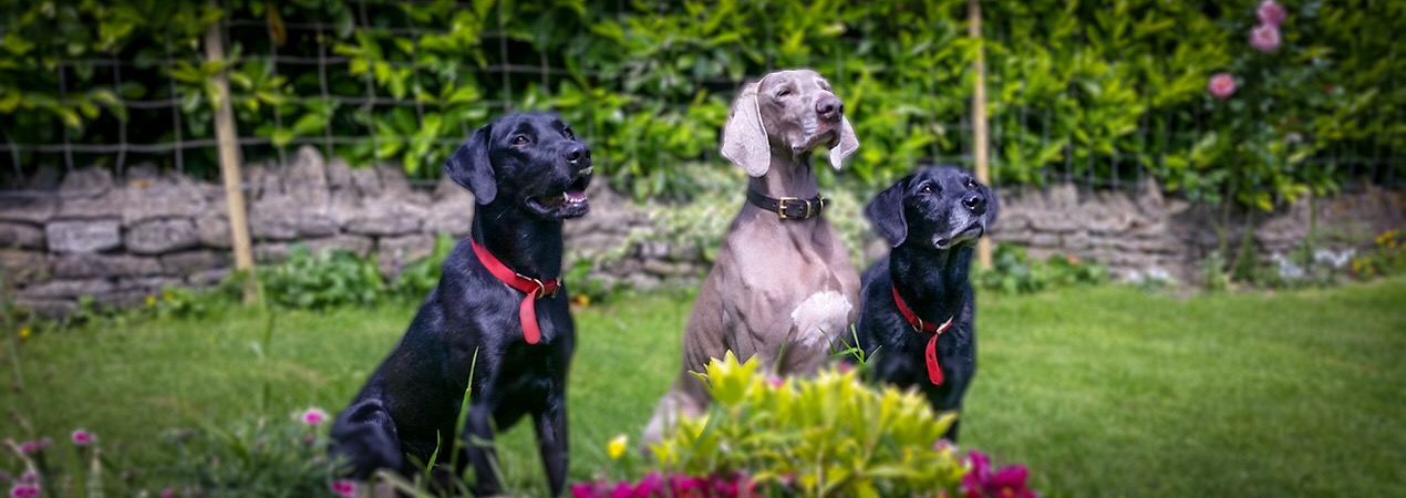 Home Dog Boarding | Dog Sitting Alternative to Kennels