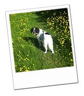 Jazz enjoying a walk while on holiday with Cheltenham Dog Carer Janet