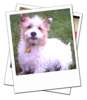Jean enjoying her Newton Abbot dog boarding holiday