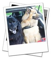 Layla and Ruby enjoying their Wiltshire dog holiday