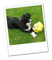 Lottie with her football on her Woking dog holiday