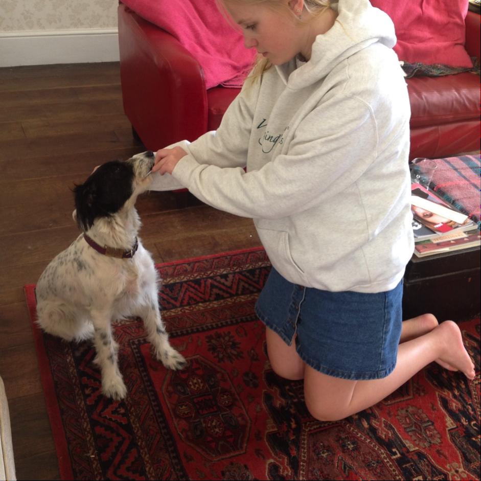 Mabel being swabbed for her dog DNA test