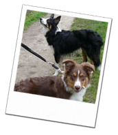 The boys enjoy a walk whilst on their dog holiday!