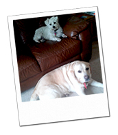 Molly and Tilly lounging on their Wiltshire dog holiday with Wagging Tails