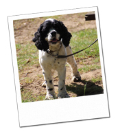 Olli enjoys a nice walk on his Wagging Tails dog holiday in Surrey