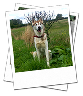 Miah out on a walk during her Oxfordshire dog boarding holiday