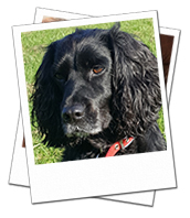 Rosie loves her dog boarding holidays with Oxfordshire Dog Carer Pennie