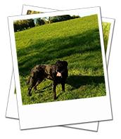 Sonny enjoying a dog walk on holiday in Oxfordshire
