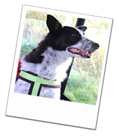 Macy enjoys her dog holidays with Wagging Tails Peterborough
