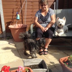 Portsmouth Dog Carer Eileen with guest Poppy and her own dog Hamish