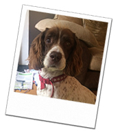 Ruby enjoying her Newbury dog boarding holiday