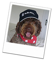 Sancho on his Paignton dog boarding holiday