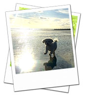 Shamus enjoying a run on the beach on holiday with Sussex Dog Carer Matt