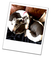 Belle and Angel snuggling up on their Wiltshire Dog holiday