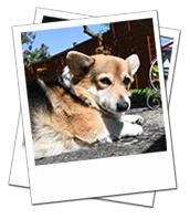 Katie enjoying the sunshine on her Wiltshire dog boarding holiday