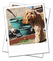 Teddy enjoying his holiday home dog boarding in Swindon