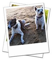Tess & Riley enjoying the beach on their Hampshire dog holiday