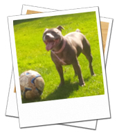Storm playing ball on her dog holiday in North London