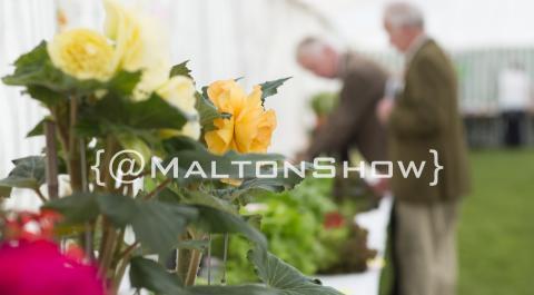 Malton Show 2018