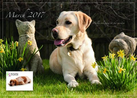 wagging tails 2017 calendar help raise funds to support a new hearing dogs puppy