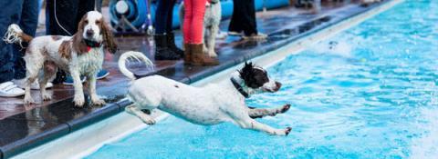 Sandford Parks Lido Dog Swim 2018