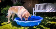 Clara enjoying her paddling pool