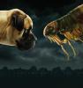 Big Flea Guarantee Campaign image