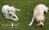 Rocky & Duke relaxing on their Coventry dog boarding holiday.